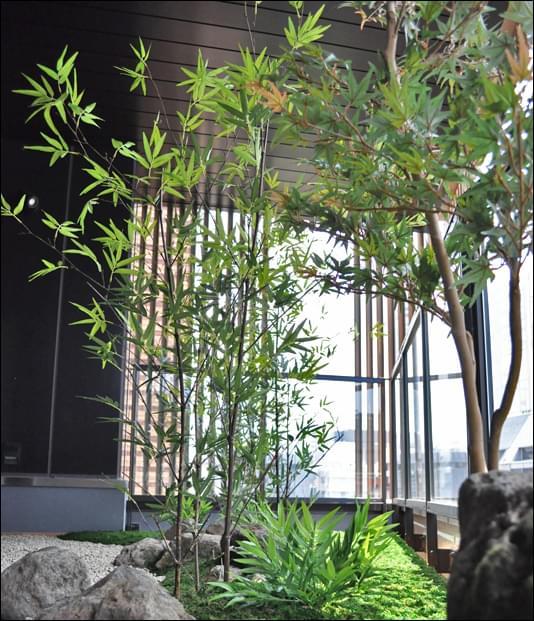 屋外で育ったかの様な人工植物(竹とモミジ)