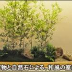 和モダンな内装に溶け込む室内坪庭造作-牛タン専門店 濱たん 新横浜