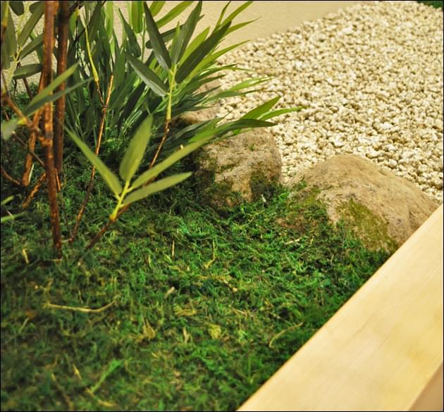 ハイゴケが庭石に活着する様子を再現