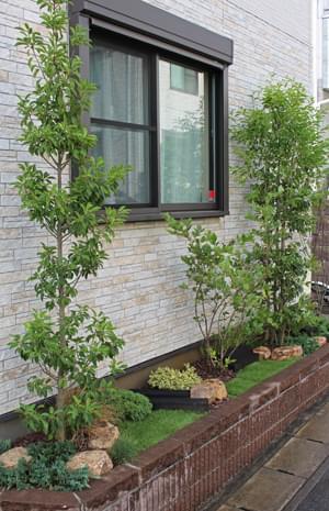 単幹と株立ちの両方を植栽