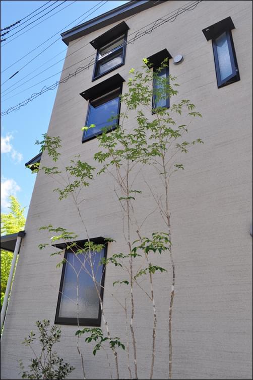 シンボルツリーとしての植木