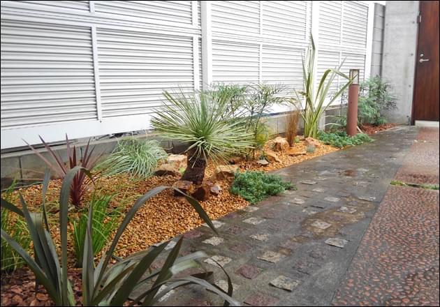 植物が主役となるドライガーデンのデザイン