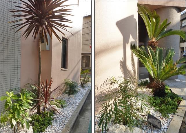 個性的な植物とパステル砂利が南国感を