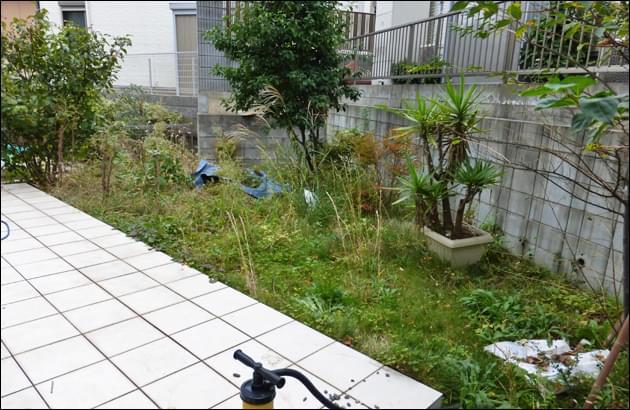 庭を侵食する雑草