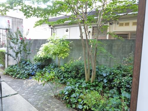 庭一面に生育して地面を覆うアイビー