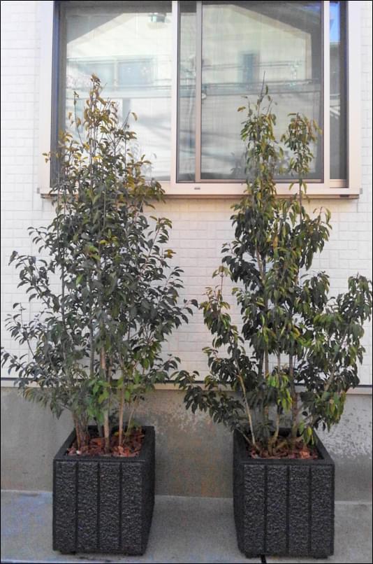 窓の目隠しに設置したプランター植栽