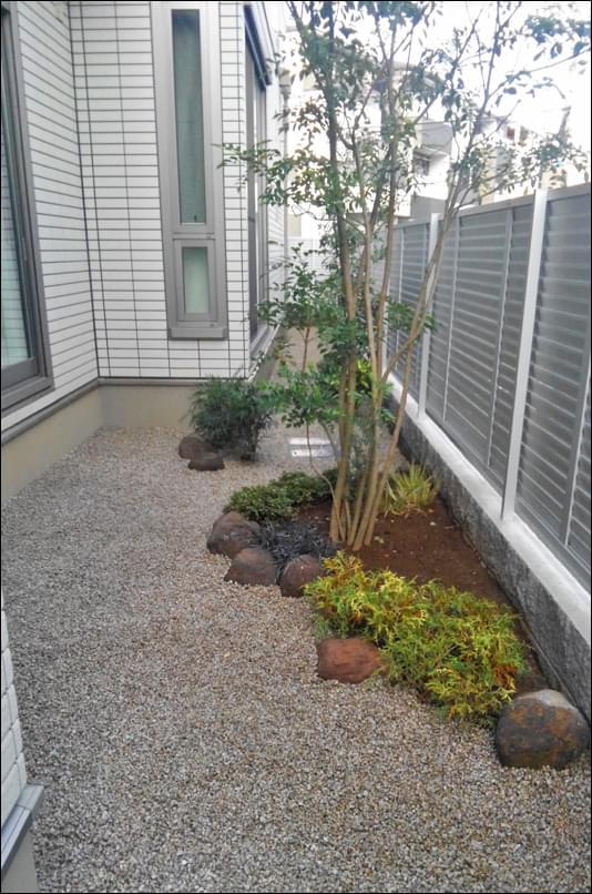 やや開けた箇所へはシマトネリコの植栽を
