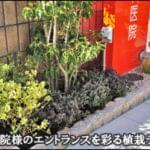 クリニックのエントランスを彩る植栽デザインを-世田谷区歯科医院様