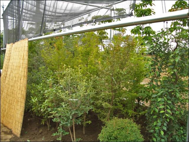 一度ファームで様子を見た植木は安心感が違います