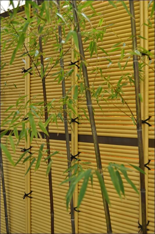 黒竹と垣根による和風の風景