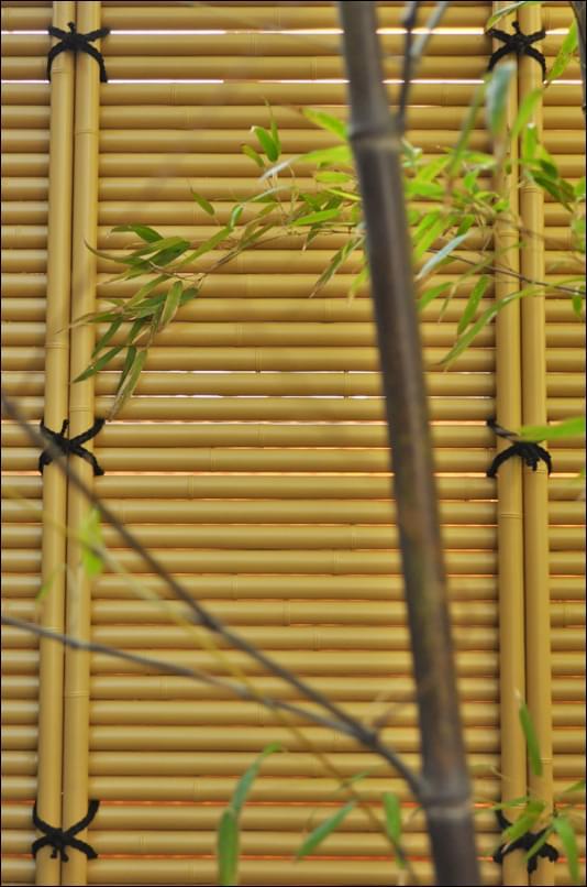 くっきりと浮かび上がる黒竹