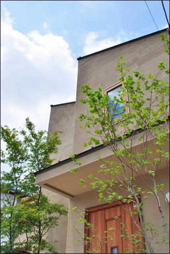 シンボルとして建物と調和する木