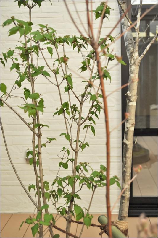 雑木類の自然な共生を表現