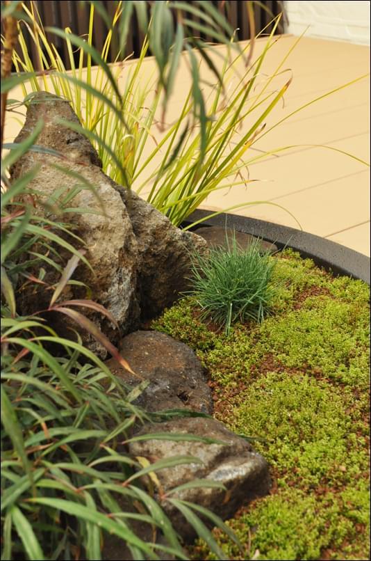 小さな石とコツボゴケが見せるナチュラル感