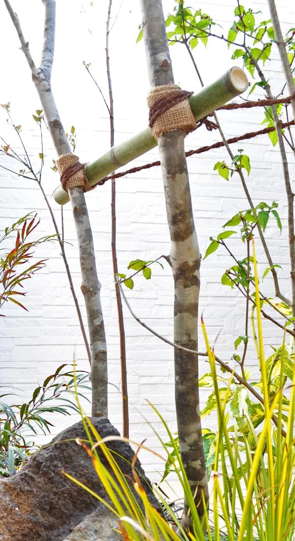 アオダモの持つ縞模様