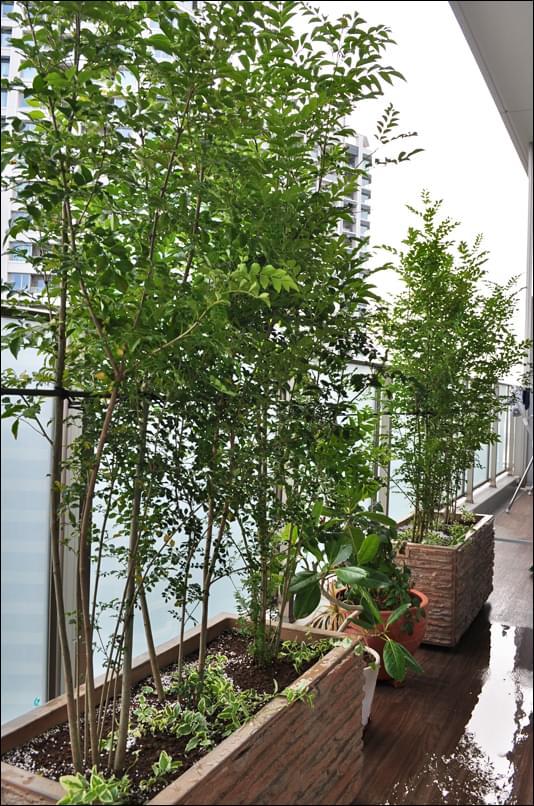 バルコニーに映えるプランター植栽