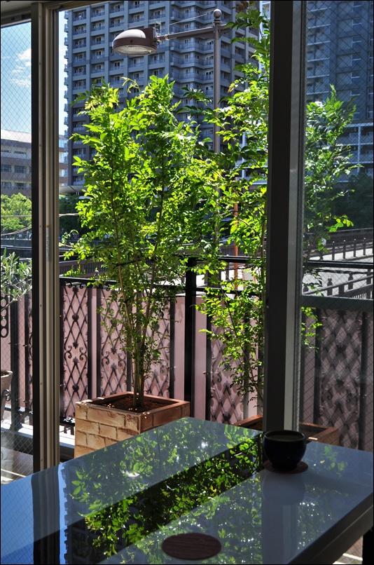 ソファから眺める植栽のグリーン