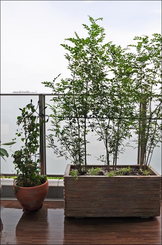 お住まいから眺める植栽のシルエット