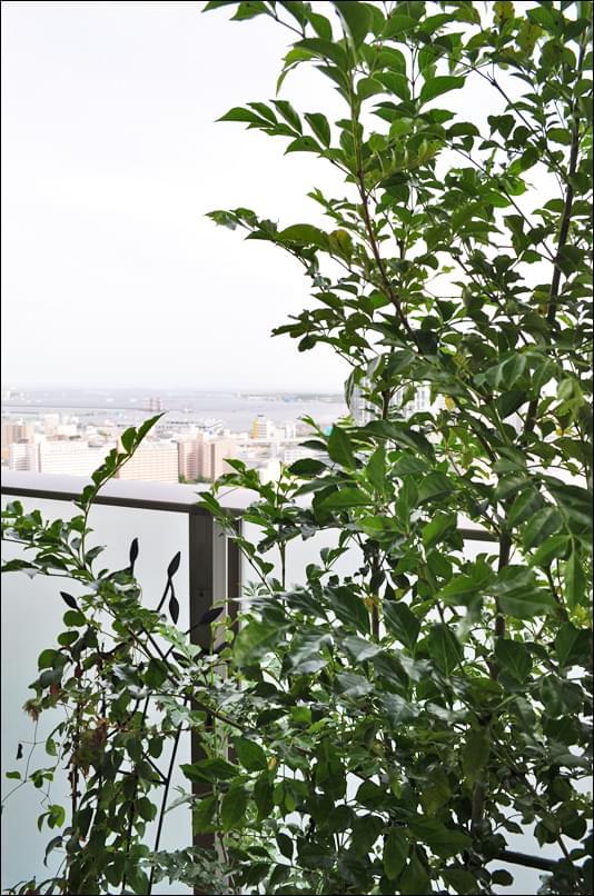 ベイビューに添える植栽のグリーン