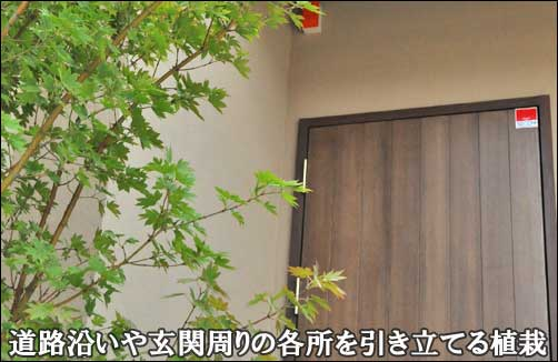 道路沿いや玄関周りを引き立てる雑木植栽-大田区K様邸