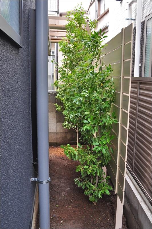 お住まい脇通路へ施工した樹脂フェンスと植栽