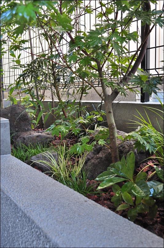 石と共生する木の幹と下草類