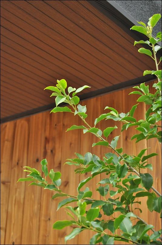 外壁のウッドに映える庭木の緑
