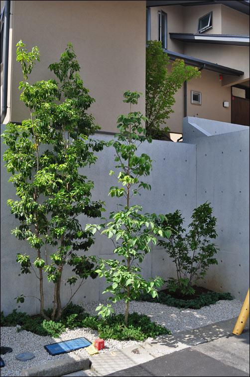 控えめな日差しを好むシンボルツリーを