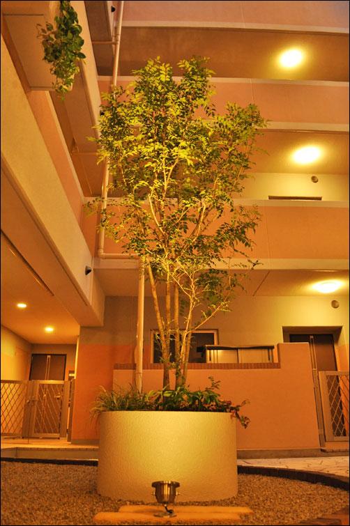 プランターで実現したシンボルツリー