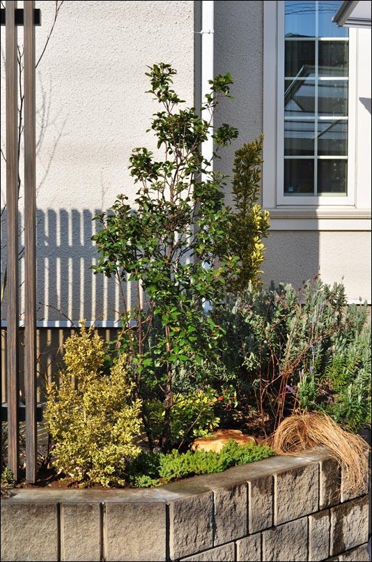 道路側から眺める植栽デザイン