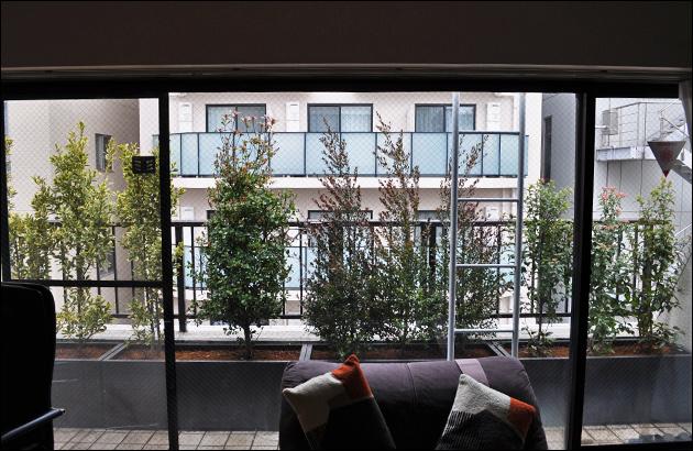 室内から眺めるプランター植栽