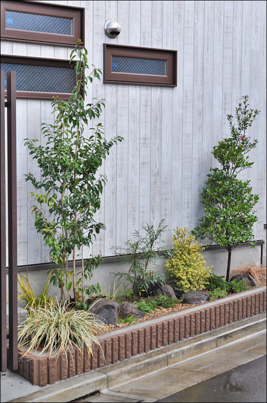 低木シンボルツリーとして活かすソヨゴ