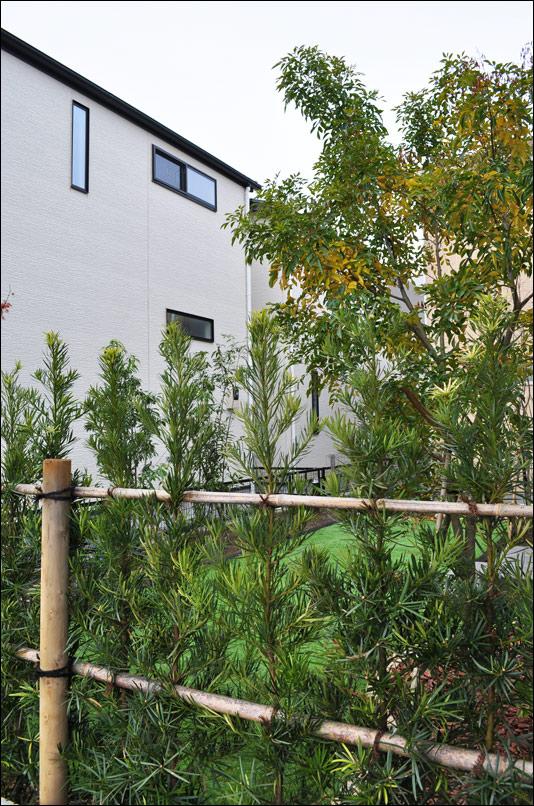 生垣越しのシンボルツリー