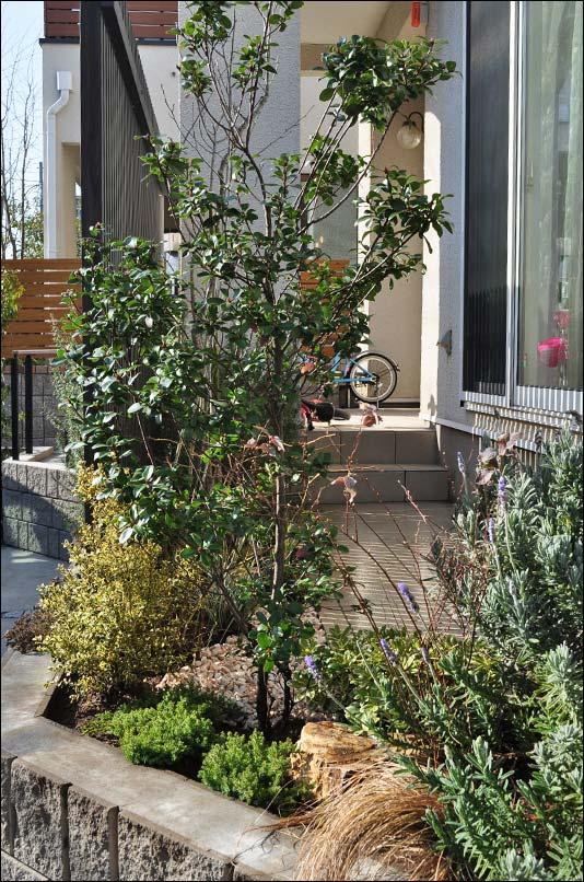 リビング窓付近の植栽構成
