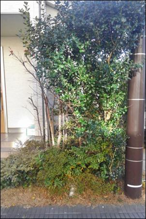 カシ類や落葉樹が押し込められた状況
