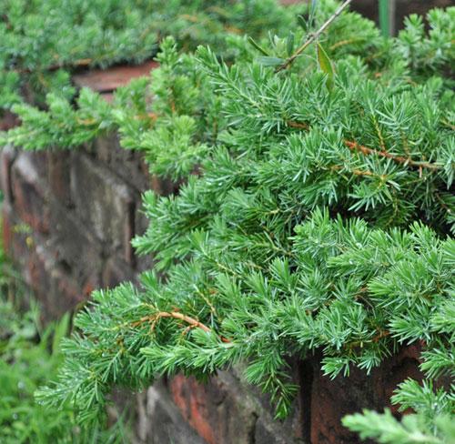 這性タイプの低木類