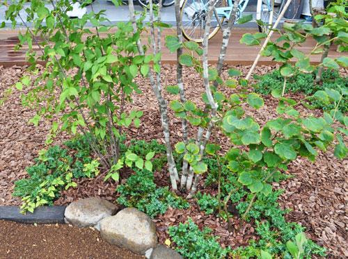 低木の植栽によって幹を保護