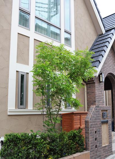 2階窓まで生育させるシンボリツリーに