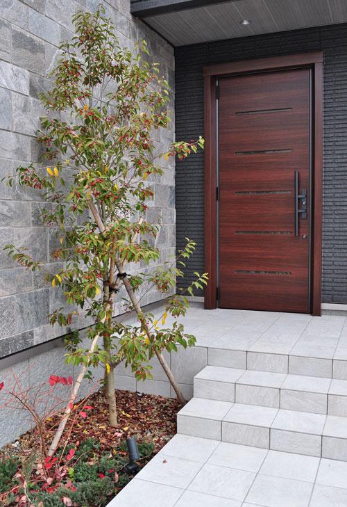 玄関先のシンボルツリーとして
