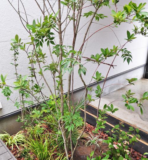 低木を自然に寄せ植えする例