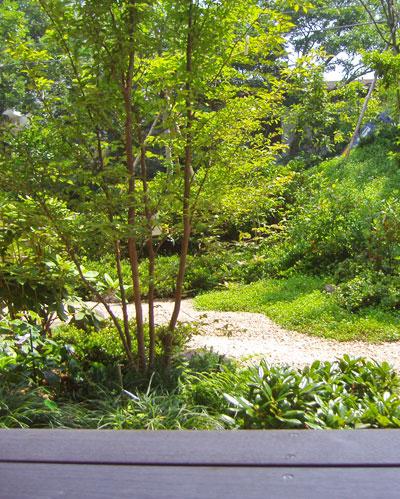 ウッドデッキ越しに植栽したヒメシャラ