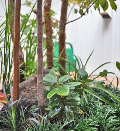 適切な環境で育つヒメシャラの幹