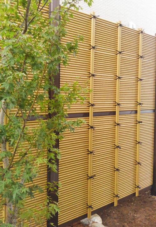 背景の垣根によって映えるイロハモミジ