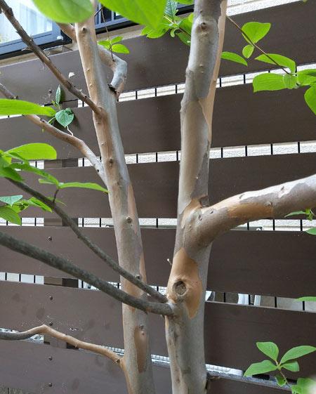 庭木との組み合わせも美しい樹脂フェンス