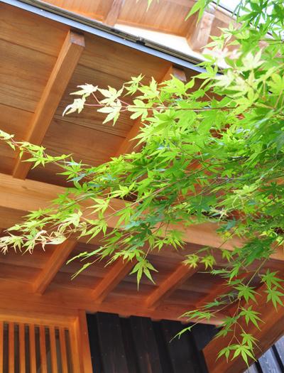 和風建築を引き立てるシンボルツリーにも