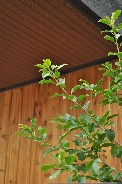緑を添え続ける常緑樹のシンボルツリー