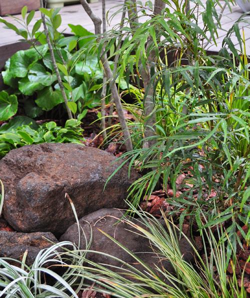 坪庭で楽しむ日陰向きの植物