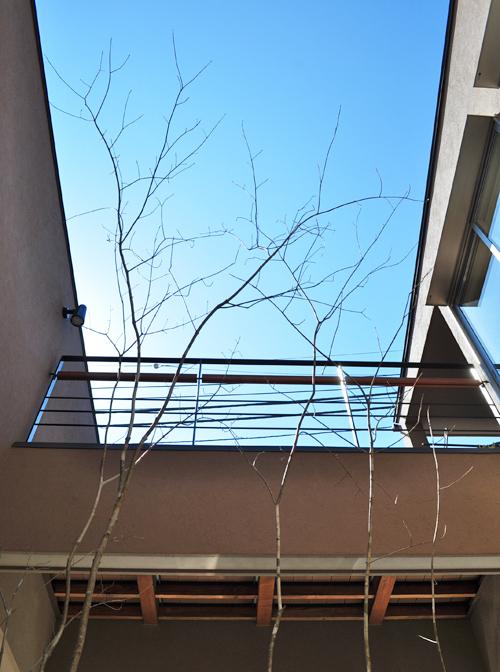坪庭の上部空間を活かした植栽