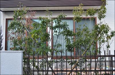 同じ種類の庭木を寄せ植えして目隠しに