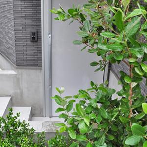 玄関前を庭木で目隠し